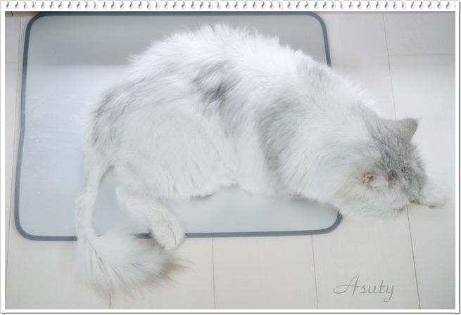 asuty5.jpg